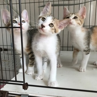 元気いっぱい子猫2ヶ月(*^^*)