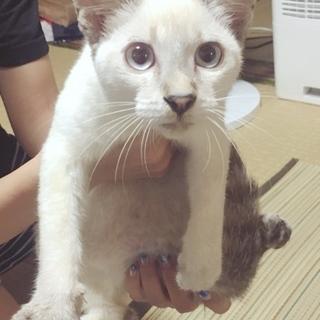 里親募集:白猫。人大好き