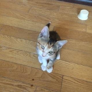 二カ月目の可愛い子猫の里親さん募集❤️