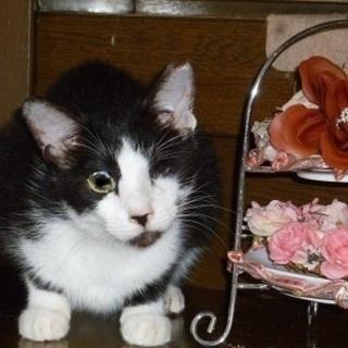 とても性格のいい甘えたな白黒猫!