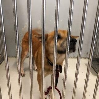 保健所に保護されていた犬、昨日、飼い主さんが引き取られました!