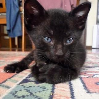 黒猫兄弟 元気な兄貴分のロンです。