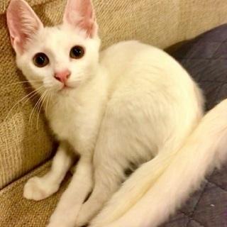 美人白猫姉妹です♡