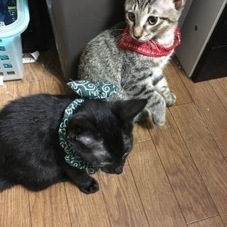 [急募]生後4ヶ月の兄妹猫ちゃん