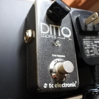 高品質のルーパーDITTO LOOPER / tc electr...