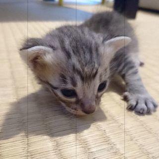もうすぐ1ヶ月になる子猫ちゃん