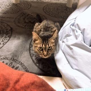 甘えん坊の長い尻尾がかわいらしい猫ちゃん