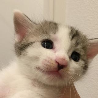 生後6週の子猫ちゃんです