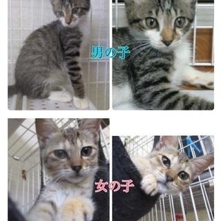 保健所からレスキュー!まだ生後2〜3カ月位の子猫♂♀2匹が家族とし...