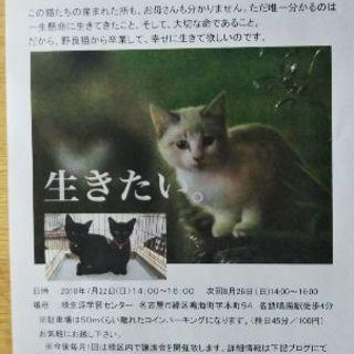 保護猫の譲渡会を開催しますけど