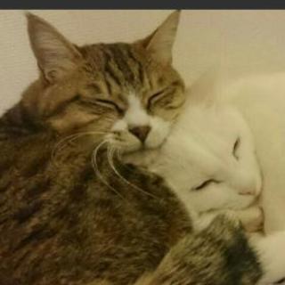 猫2匹、ケージ(オレンジ色)、トイレ、その他含みます