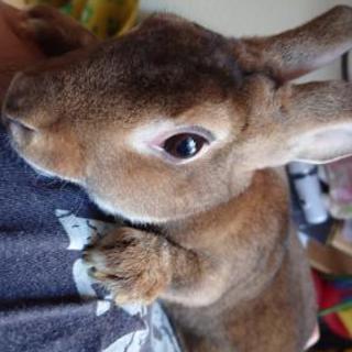 【お話中】ウサギさん里親募集します🐰