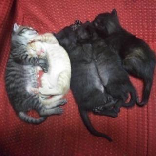 生後約3週間の子猫☆