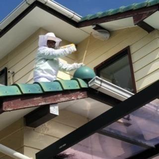 蜂の巣駆除 知多半島の便利屋 ハートフル【常滑市、知多市、半田市、...