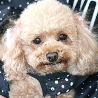 トリマー・ドッグトレーナーに興味がある方へ!神戸愛犬美容専門学院 ...