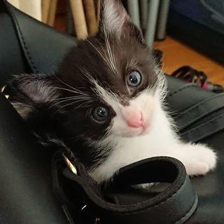 🐈七夕産まれの子猫🐈