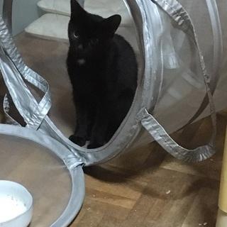 黒猫の猫ちゃんです