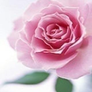コダマクレイの花/名古屋(オリジナル粘土・透ける花・クレイ盆栽)