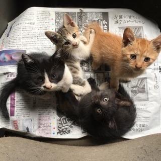 子猫を貰って頂ける方を探しています!