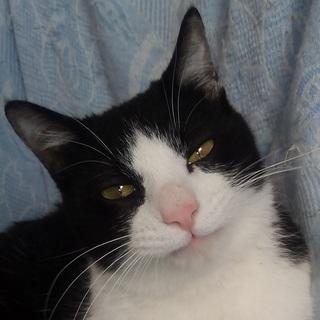 怖がりなイエローグリーンアイ(厳し過ぎる要求無し&縁結び&至れり尽くせり)24時間年中無休 - 猫