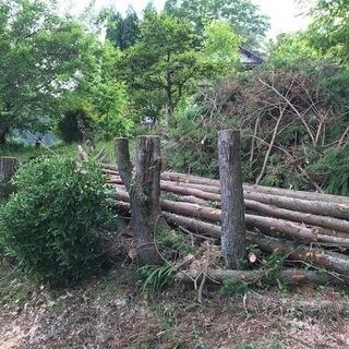 庭木伐採、抜根、処分承ります!!高所もOK!!格安!!