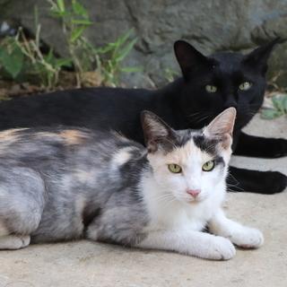 親猫夫婦と子猫4匹の里親さんをそれぞれ大募集