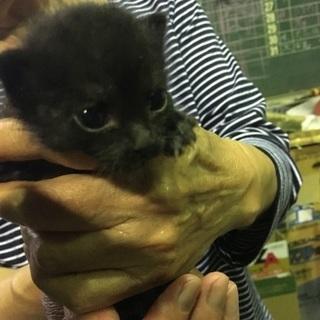 黒子猫4匹