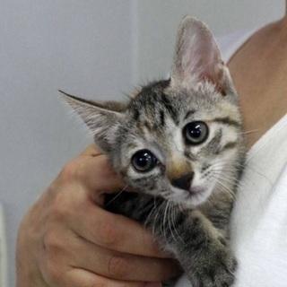 超絶可愛い子猫 おとりちゃん