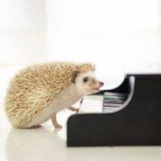 ピアノ出張レッスン  2000円+交通費