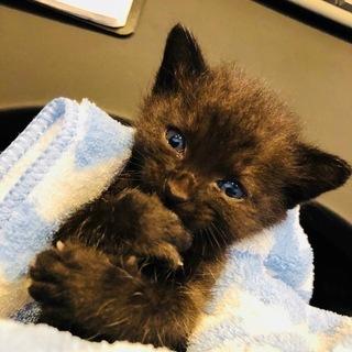 ◆急募◆子猫の里親募集