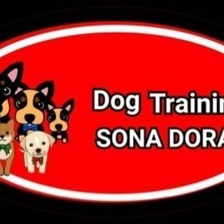 犬の問題行動改善 犬のしつけ ドッグトレーニング