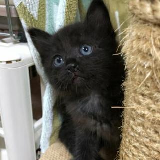 ふわもこ黒猫!1ヶ月半