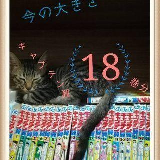 子猫(3か月)の里親募集