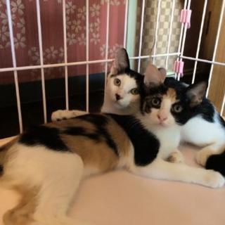 生後3ヶ月の兄妹子猫