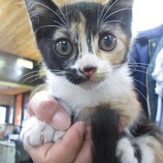 子猫(ミケの女の子)3
