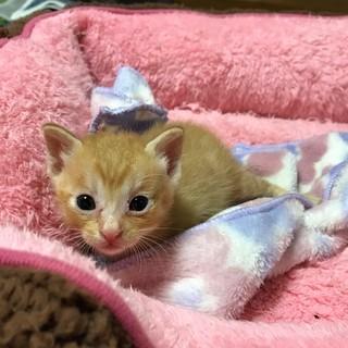 2週間ほどの可愛い子猫3兄妹です♪