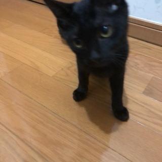 生後3、4ヶ月の黒猫ちゃん - 猫