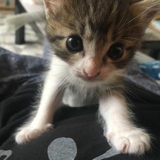 生まれて1ヶ月経ってない子猫です
