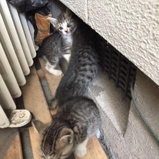 助けて下さい‼️ - 猫