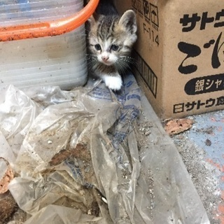 助けて下さい‼️ - 姫路市