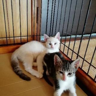 生後3ヶ月可愛い🐈子猫✨