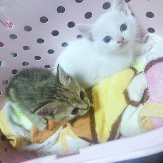 手放すのが凄く惜しい美しい子猫ちゃん達です。