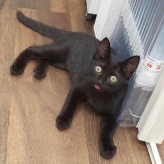 甘えん坊~黒猫キキちゃん♀の子 − 神奈川県