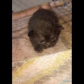8月16日に生まれました。黒子1匹の里親様を探しています。。