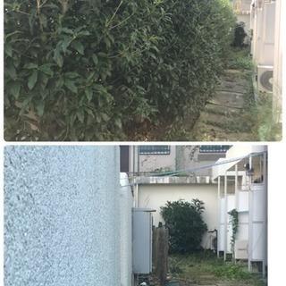 アパート マンションの敷地内植樹帯管理手入れ店(所沢市 狭山市志...