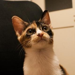 2.3ヶ月のミケ猫