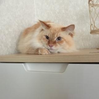 2歳になる猫の里親さんになってくれる方