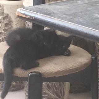 かわいい子猫の里親さんになってください