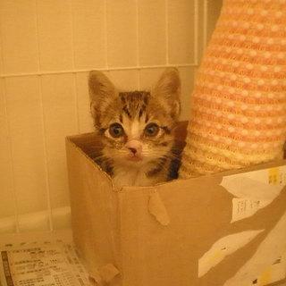 ☆生後1ヶ月半の幼猫の里親を探しています