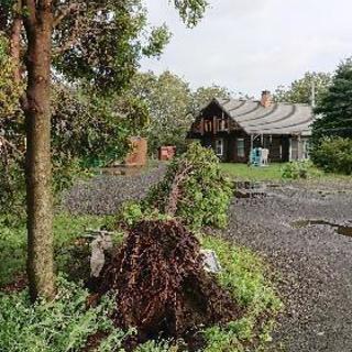 台風被害 倒木 庭の片付け いらない木 処分します❗